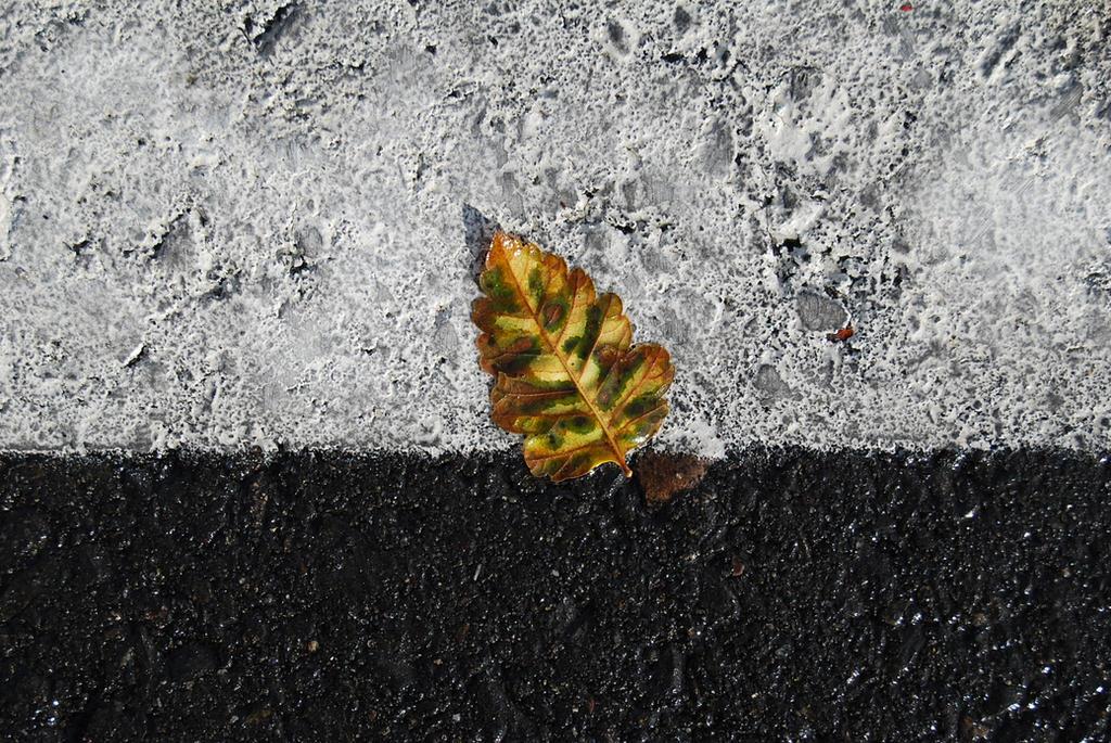 November Leaf by tr4br