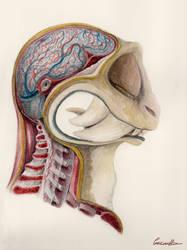 Monster anatomy series: Head
