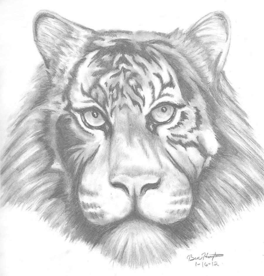 Tiger sketch easy