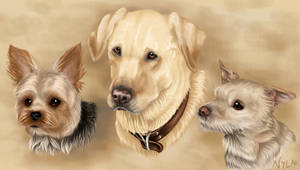 Commission : Dog Trio Portrait