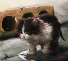 Stray Kitten by FiRez-DA