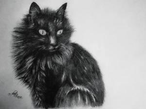 Black Black Cat