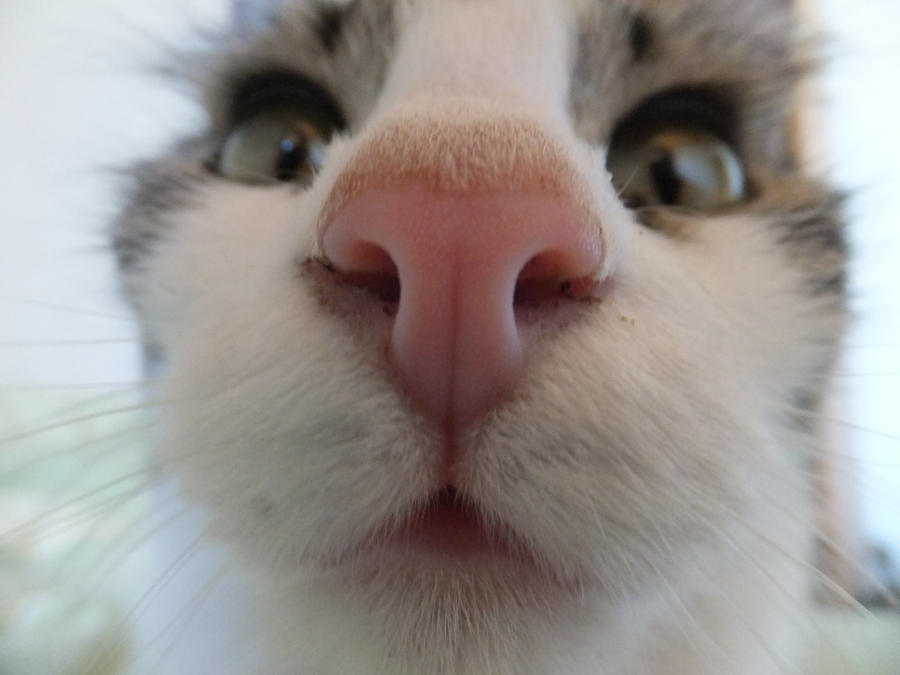 Image result for cat nose