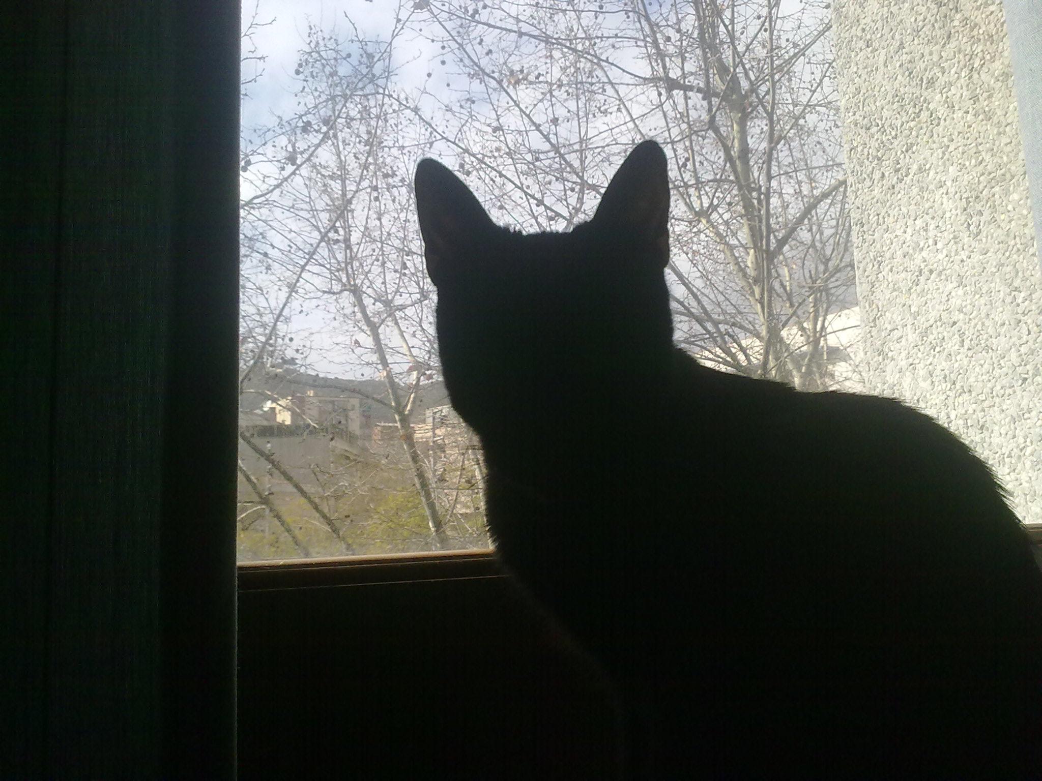 brimark's Profile Picture