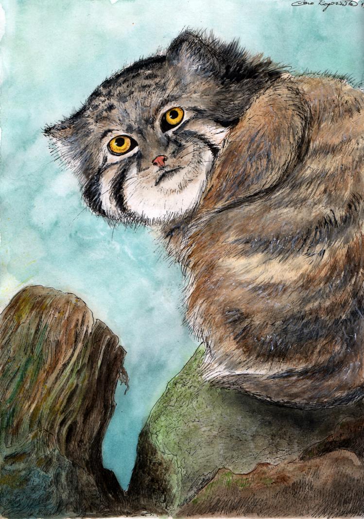 Pallas cat by Kikifuko