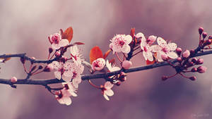 Soft side of Spring III