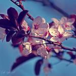 Day 10 - Spring by CarlaSophia