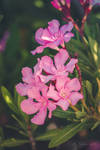 044 - Flowers by CarlaSophia