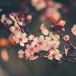 Last Spring III