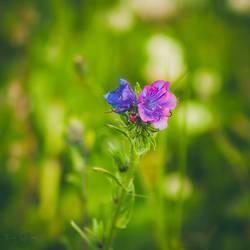 187 - Wild flowers by CarlaSophia