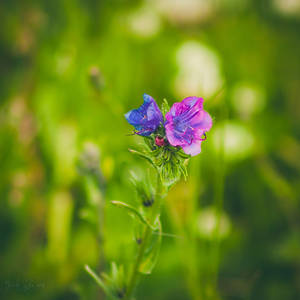 187 - Wild flowers by CarlaSophia