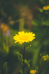 188 - Spring by CarlaSophia