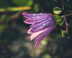 Rain and sunshine II by CarlaSophia