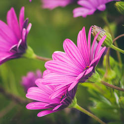 Spring days by CarlaSophia