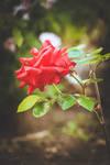 197 - That garden by CarlaSophia