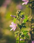 205 - Wild flowers by CarlaSophia