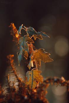 231 - Autumn morning