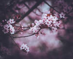 262 - Blossom