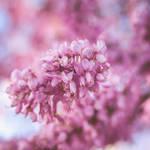 264 - Shades of pink
