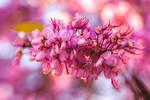 267 - Shades of pink