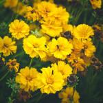 284 - Wild flowers by CarlaSophia