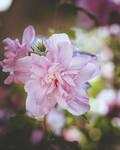 295 - Summer flowers