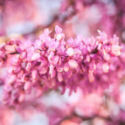 Shades of pink I