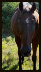 last  photoshoot of  my  horse