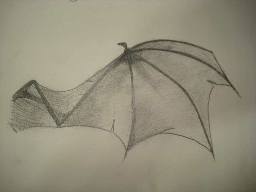 bat wing by aannaeyalia on deviantart
