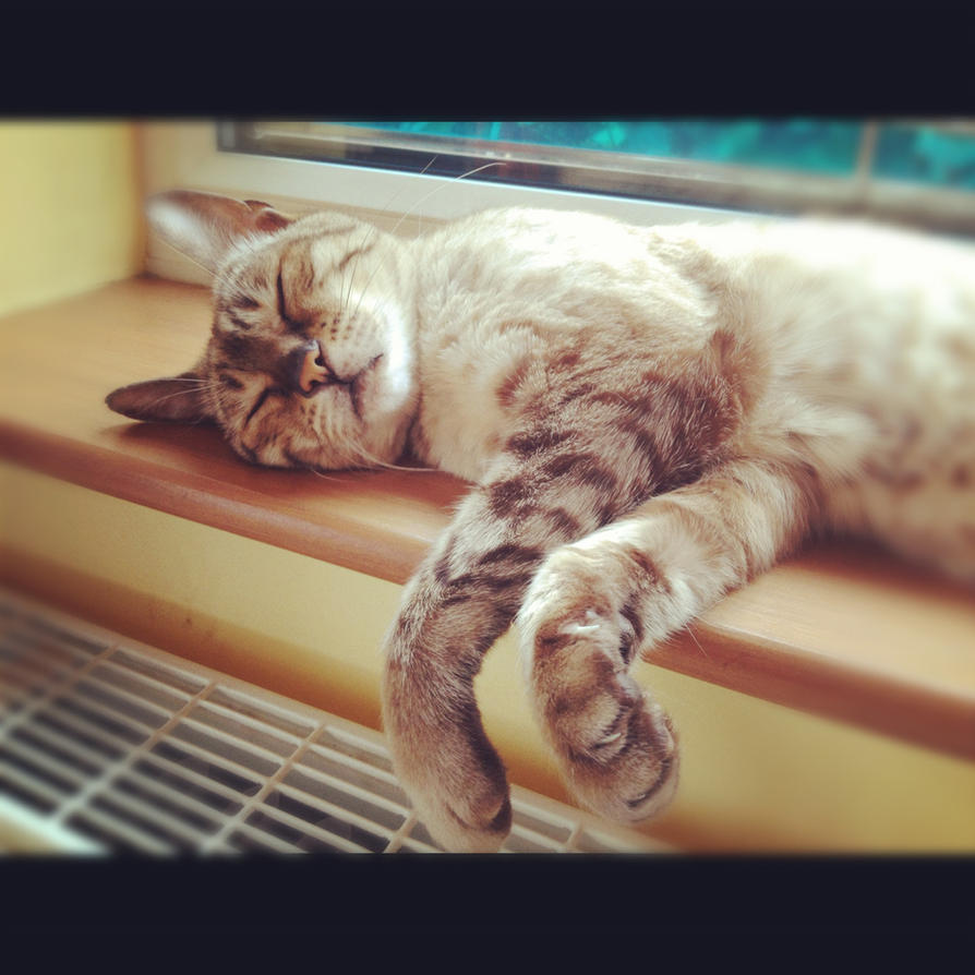 ...Sleepy days... by LexiIsFailingAtThis