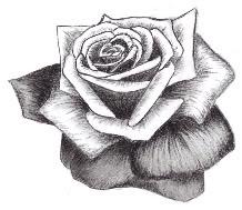 roses so sweet by GunsGo--BANG