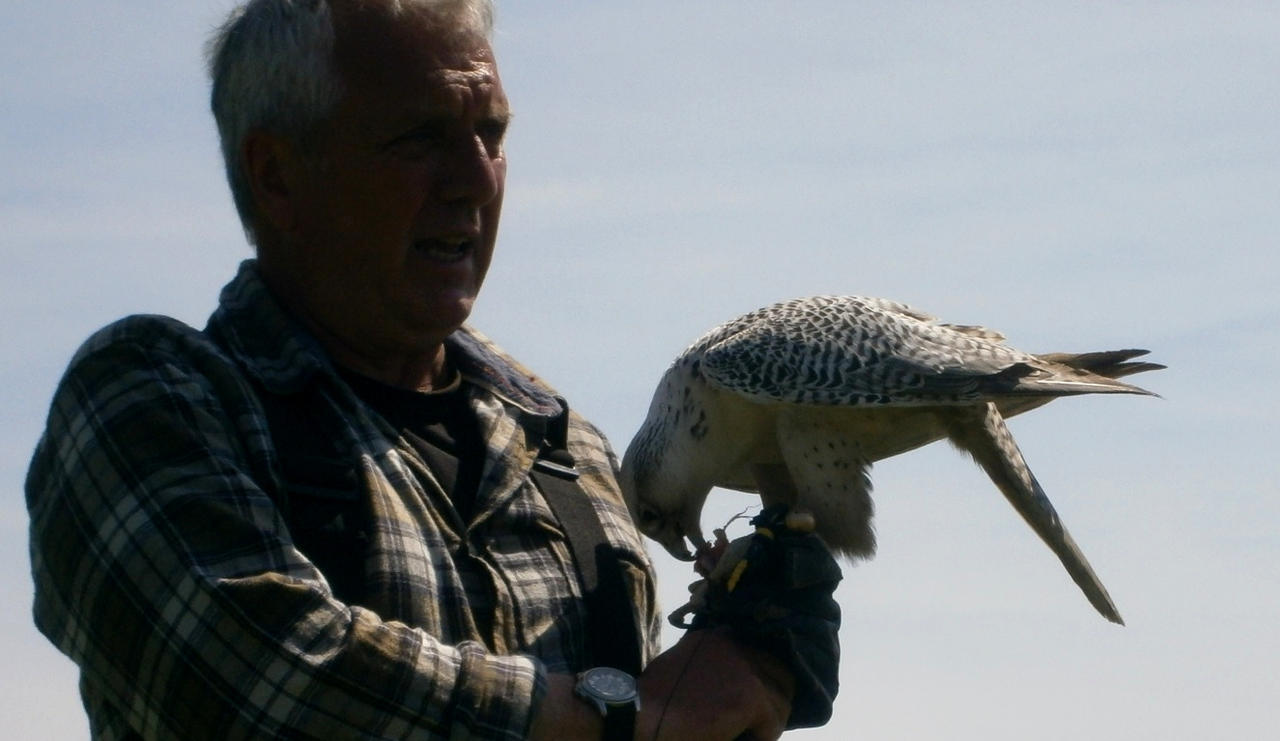 Silver Gyrfalcon on Glove 01 by Stock-of-Rao on deviantART