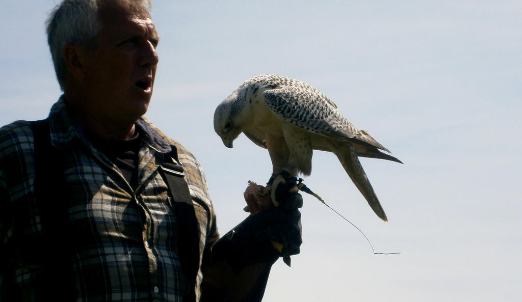 Silver Gyrfalcon on Glove 03 by Stock-of-Rao on deviantART