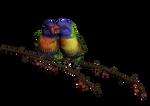 PNG Bird 4