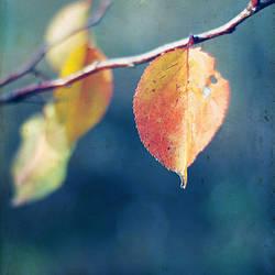 I am a leaf...