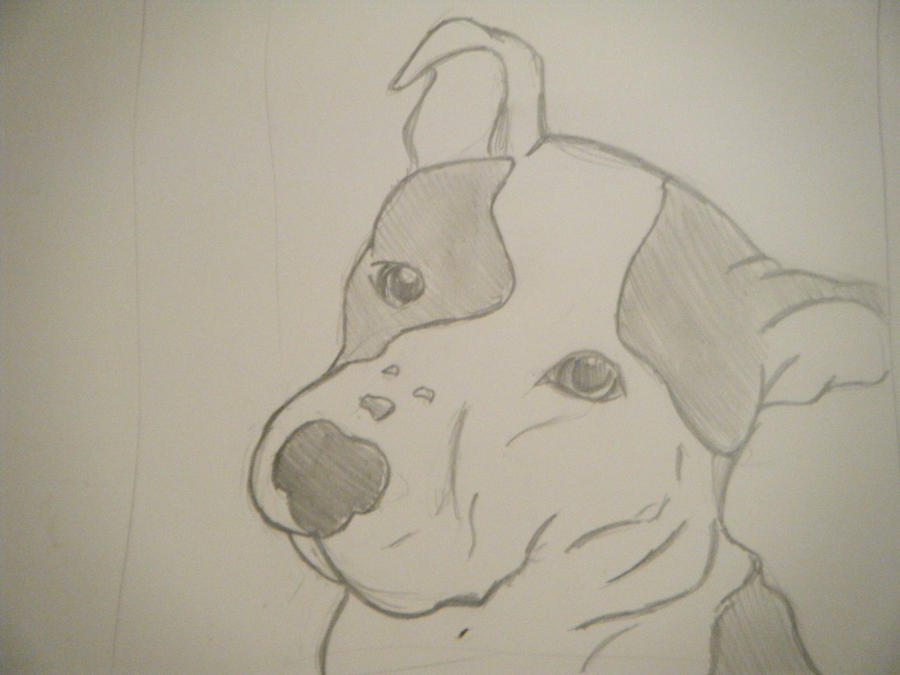 Pitbull dog drawings in pencil - photo#15