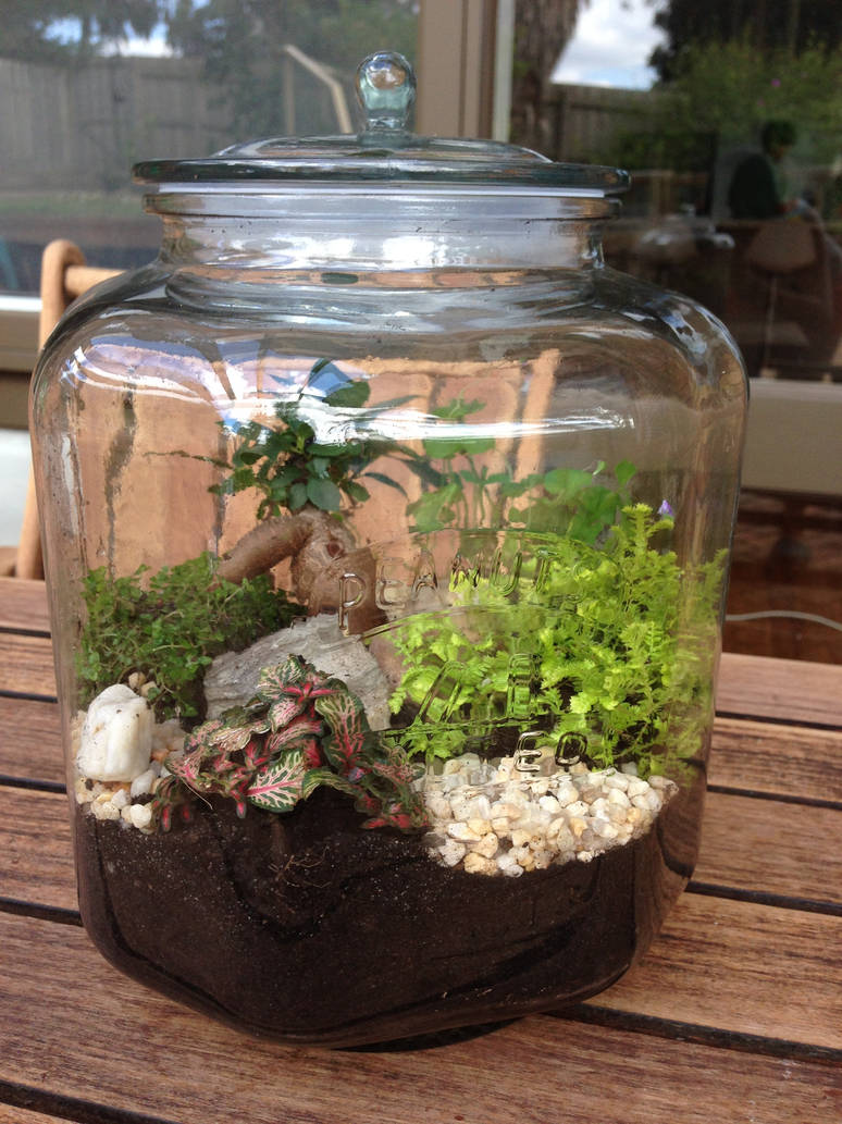 Terrarium In An Old Cookie Jar By Muffinlovin On Deviantart