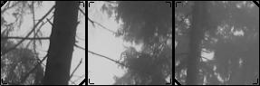 Dark Aesthetic Forest Divider by memekyuwu