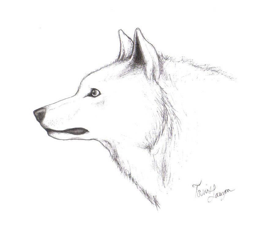 White Wolf by ChiroOokami on DeviantArt