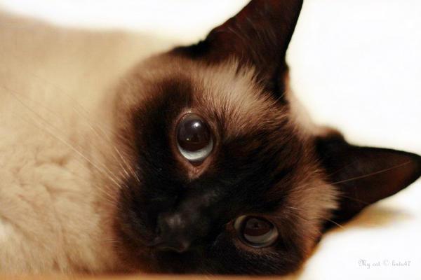 My cat by lintu47