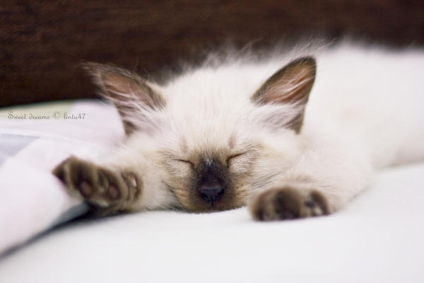 Sweet dreams by Lintu47