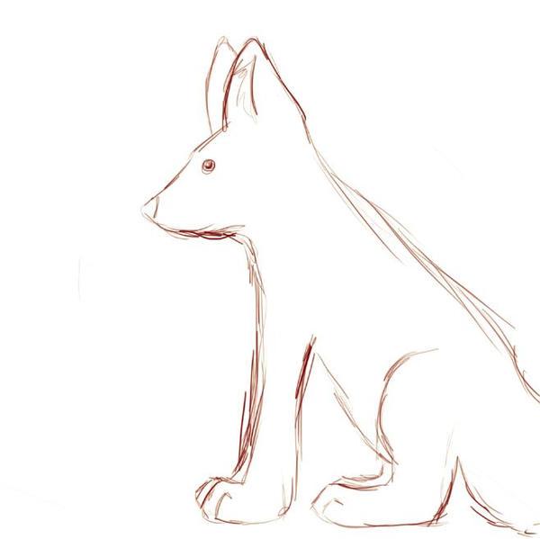 Fox Wip?