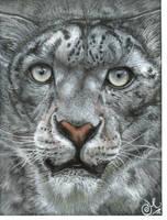 snow leopard by xxx-ellie