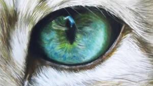 Cat eye by xxx-ellie