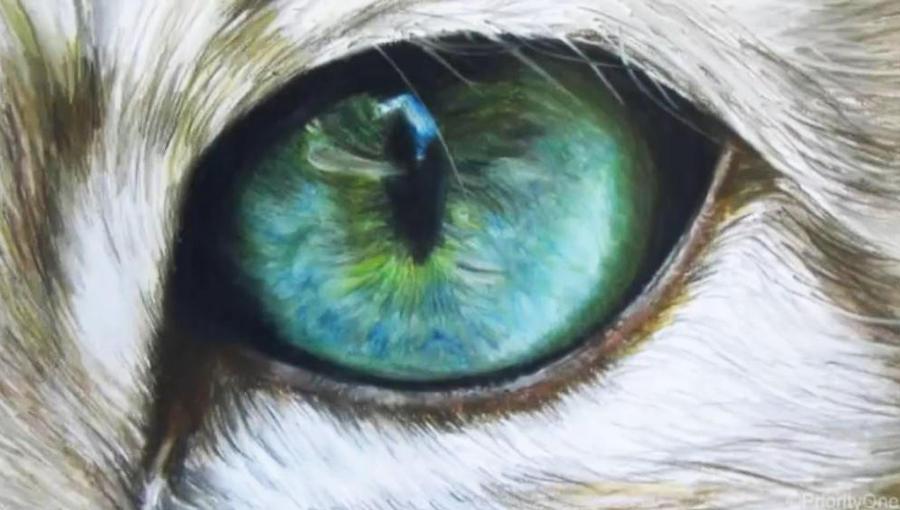Cat eye by xxx-ellie on DeviantArt