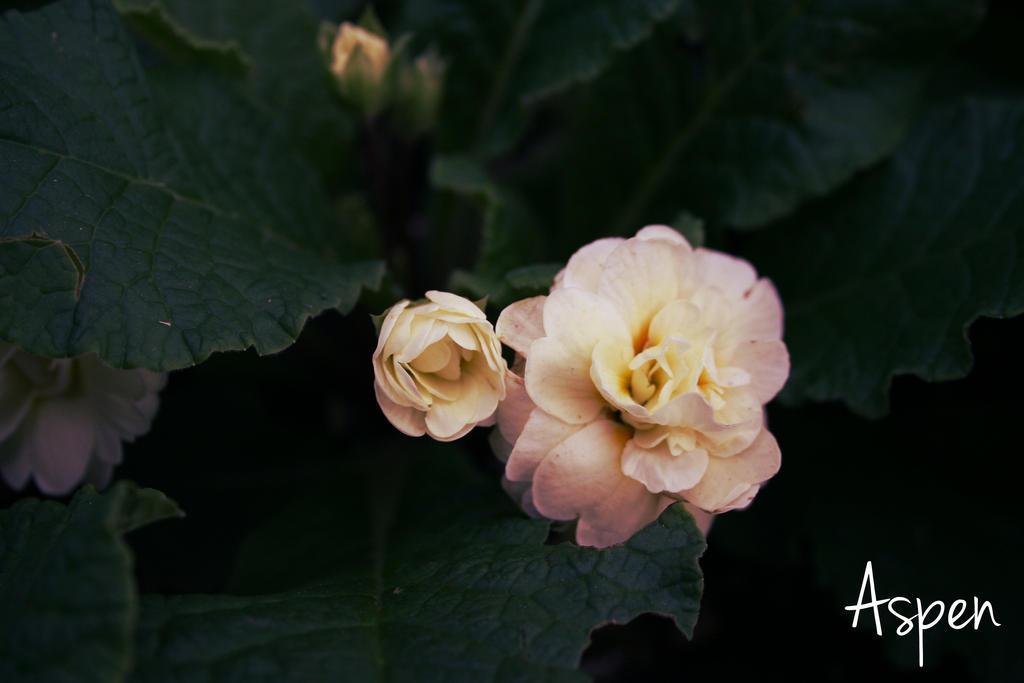 Cream de la Cream by Aspen287