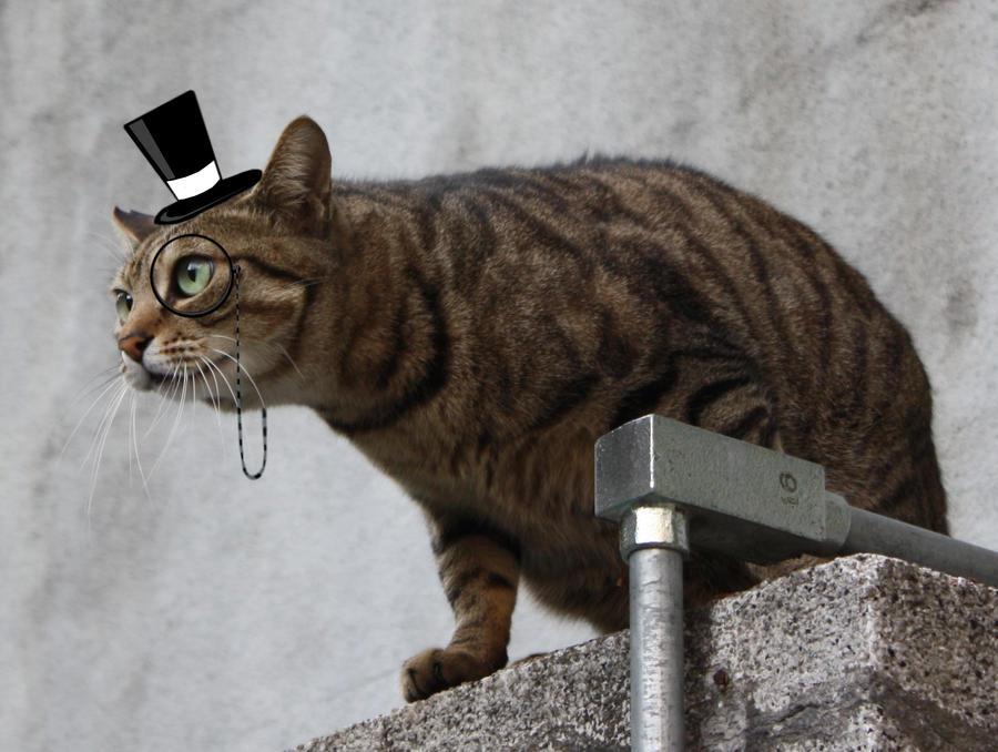 Gentleman cat by CookiemagiK