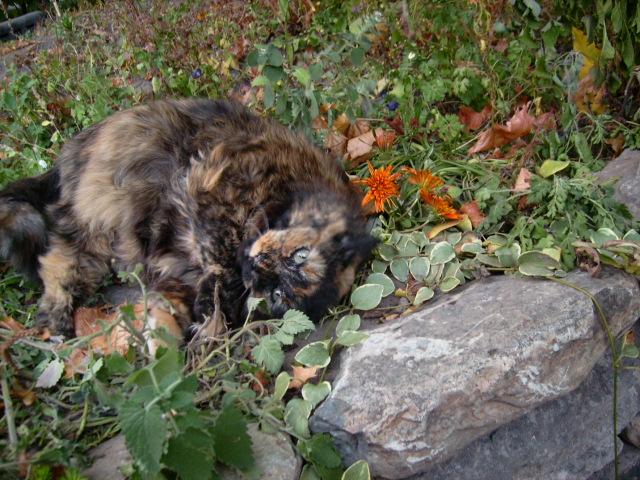 Catnip Lover by LadyoftheSeireitei
