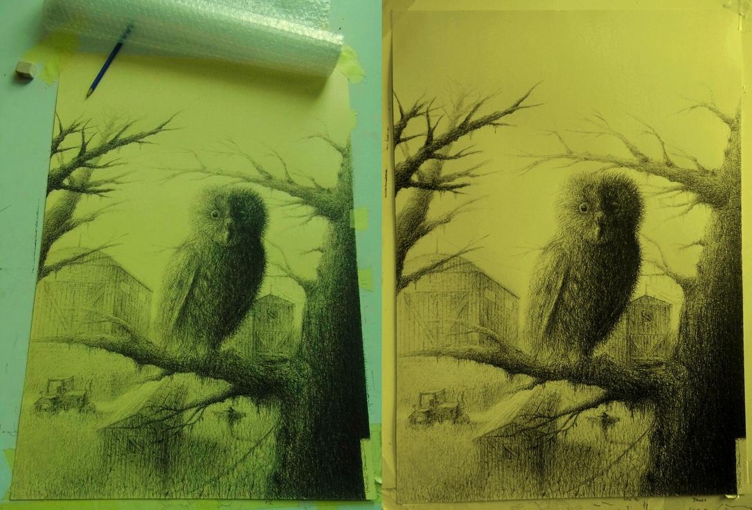Owl by damianparlicki
