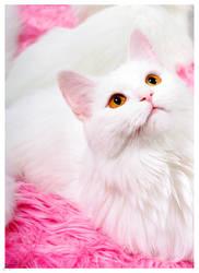 Cotton Candy by neeta